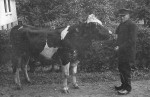 Eske Øvlesen med tyren fra Enghøjgård. Ca. 1915