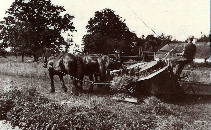 Høstarbejde på Mariendals marker omk. 1940 Dengang var høstarbejdet meget anstrengende for både heste og kusk. Hestene kunne trække selvbinderen et vist antal timer, så skulle de have et hvil og noget foder. På de større gårde med mange heste kunne man skifte hesteforspand og så fortsætte høstarbejdet, men når duggen begyndte at falde, måtte man stoppe. Det lille husmandssted i baggrunden er Gl. Mariendal, som lå nærmere stranden lidt nord for gården Mariendal.