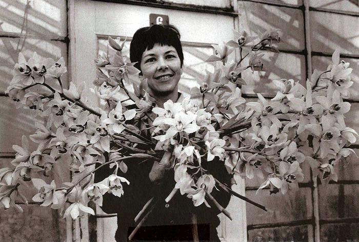 """""""Vestervang"""". Et dejligt billede fra gartner Anders Nielsens orkidé-gartneri i Beder. Det er taget den 23. marts 1967. Pigen er Elin Jensen, gift med Henning Jensen, der arbejdede på gartneriet. '"""