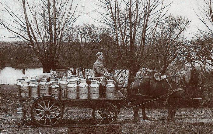 Mælkekusken på vej til Beder Mejeri. Årstallet ukendt, mandens navn ligeså. Hvert år udliciterede mejeriet de forskellige mælkeruter, som interesserede så kunne byde på. Det gjorde som regel husmændene, da deres ejendomme var for små til at give et rimeligt udbytte. Mælkespandene, som de hentede rundt på landbrugsejendommene, og som vejede ca. 90 kg, måtte de løfte op på vognen.