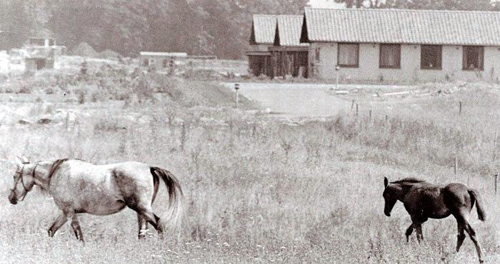 l slutningen af 1960´erne begyndte udbygningen og flytningen til Beder. Her ses 3 nybyggede parcelhuse i stadig landlige omgivelser. Foto 1969.
