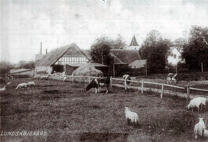 På Malling Kirkevej lå gården Lundshøjgaard på begge sider af vejen. Staldbygningerne er nu revet ned, stuehuset er i dag præstebolig, Kirketårnet ses i baggrunden. Til højre i billedet ses gavlen af stuehuset. Skorstenen i baggrunden hørte til savværket, der hvor SuperBrugsen ligger i dag.  Foto 1920-30